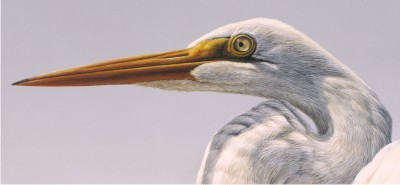 "Detail of ""Great Egret"""