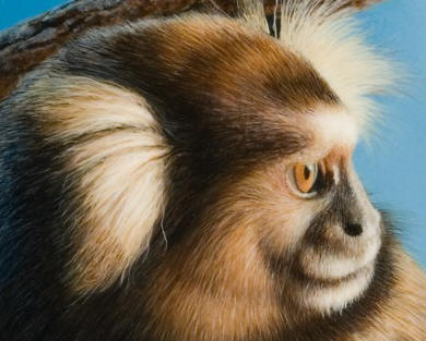 "Detail of ""Watchful Gaze - Common Marmoset"""